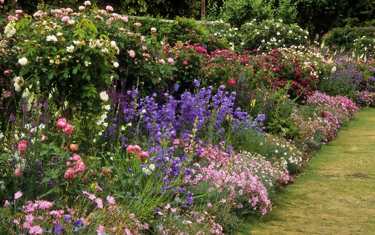 english garden flowers. Kind Of Garden Are You Making? Introducing: A Modified English Flowers