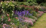 English Flower Border