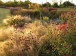 Oudolf Garden autumn