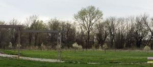 Orchard April 2015