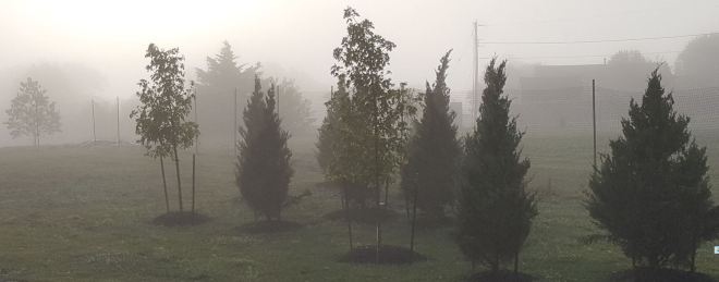 Foggy Entance Grove 6.27.2016