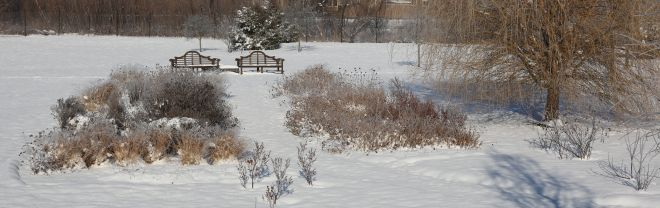 Perennial border in snow. North